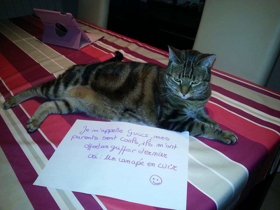 pancarte_de_la_honte_chat_gucci