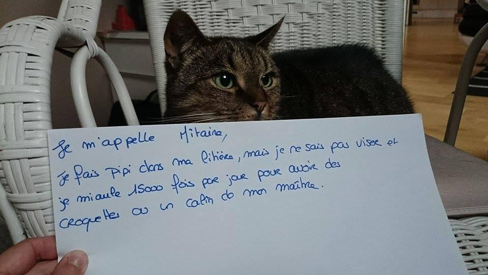 pancarte_de_la_honte_chat_mitaine