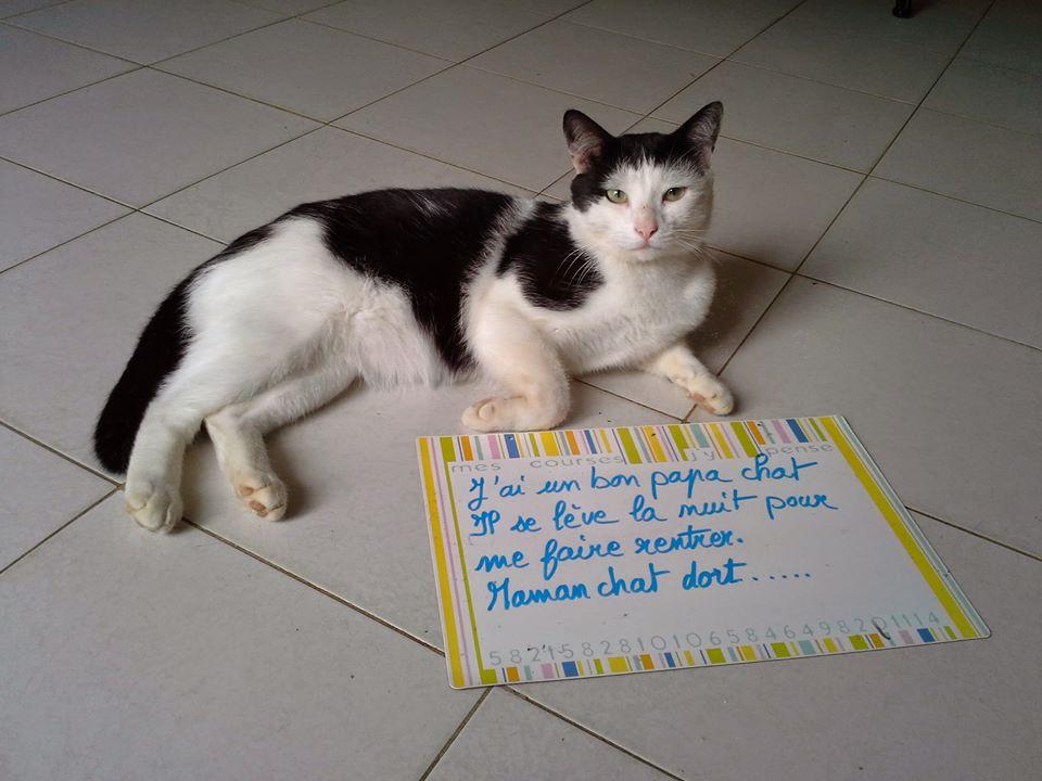 b b chat ces chats qui m ritent une pancarte de la honte. Black Bedroom Furniture Sets. Home Design Ideas