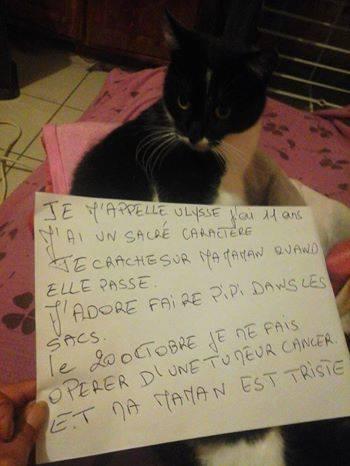 pancarte_de_la_honte_chat_ulysse