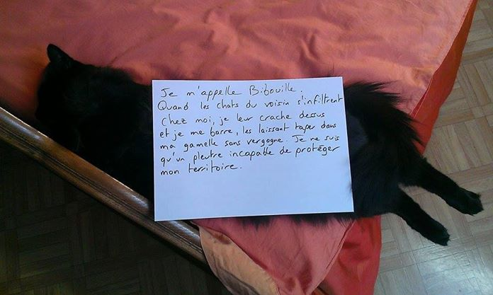 pancarte_honte_chat_bibouille