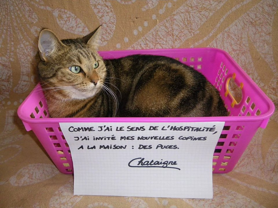 pancarte_honte_chat_puces
