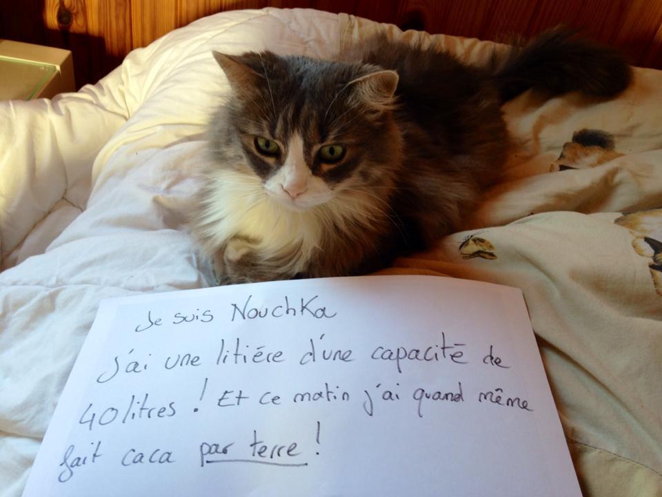 pancarte-de-la-honte-chat-nouchka-drole