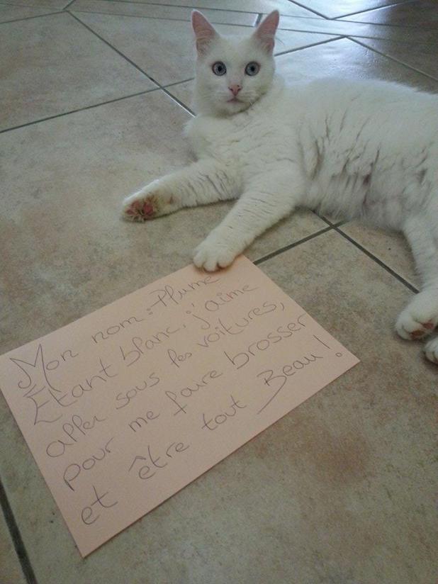 pancarte-de-la-honte-pour-chats-drole