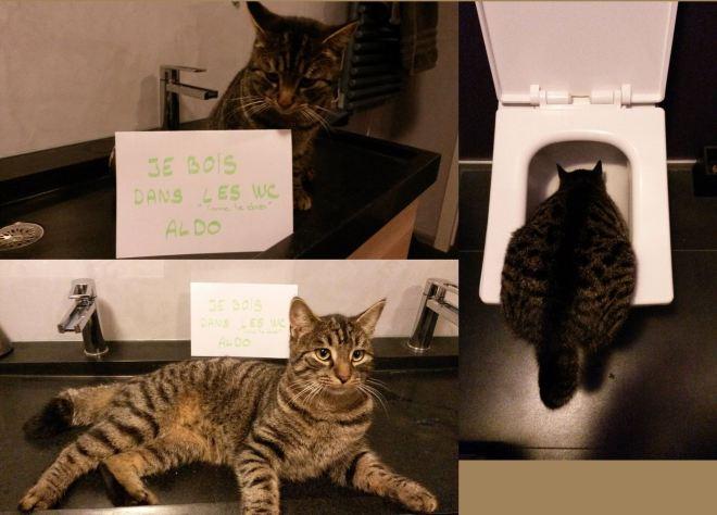 pancarte-honte-chats-aldo-chat-boit-wc