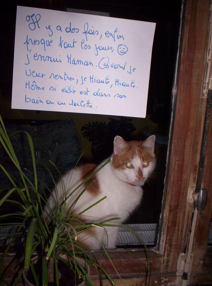 pancarte_de_la_honte_chat_aller-retour
