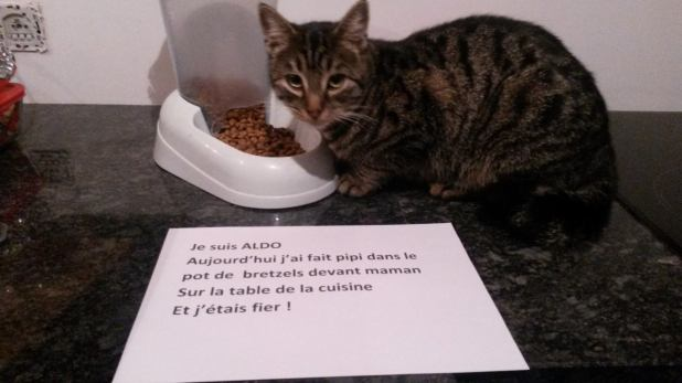 pancarte_de_la_honte_chat_bretzel_aldo