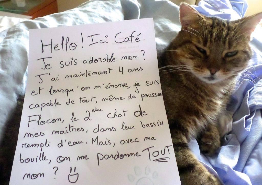 pancarte_de_la_honte_chat_cafe_eau