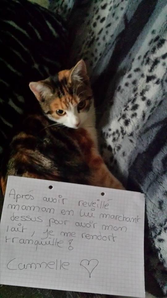 pancarte_de_la_honte_chat_cannelle