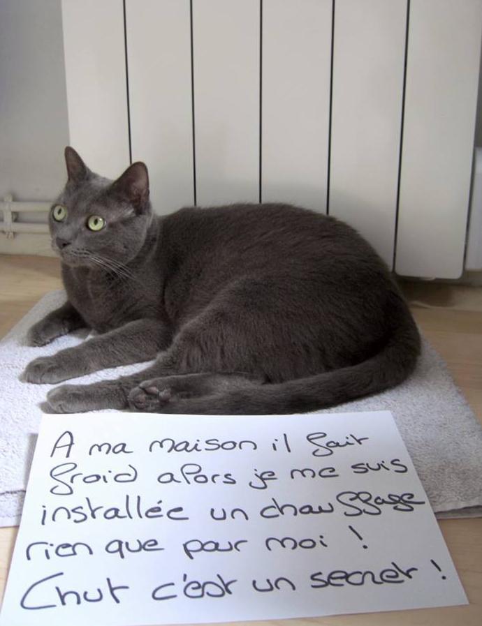 pancarte_de_la_honte_chat_chansu_chauffage