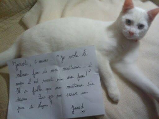 pancarte_de_la_honte_chat_fil-jared