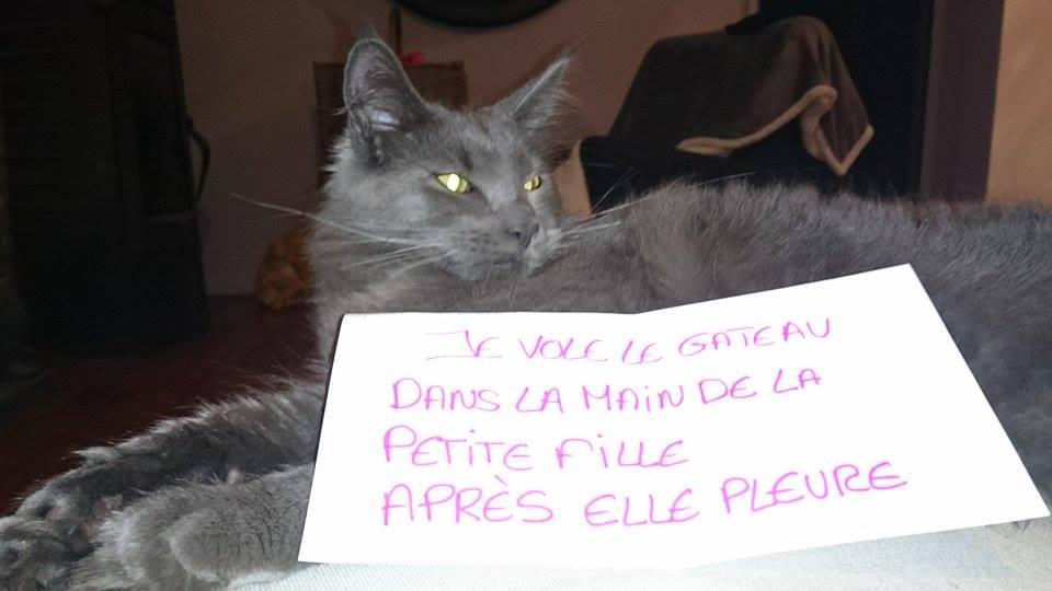pancarte_de_la_honte_chat_fille