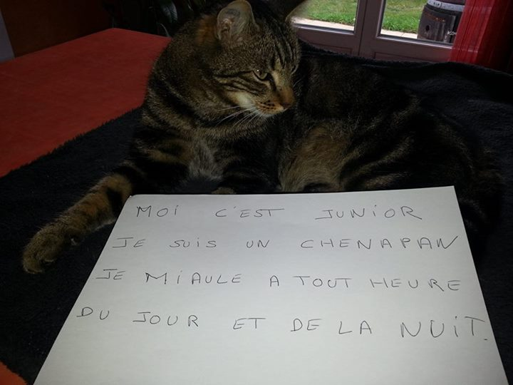 pancarte_de_la_honte_chat_junior