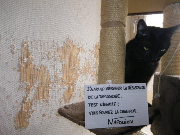 pancarte_honte_chat_napoleon_tapisserie