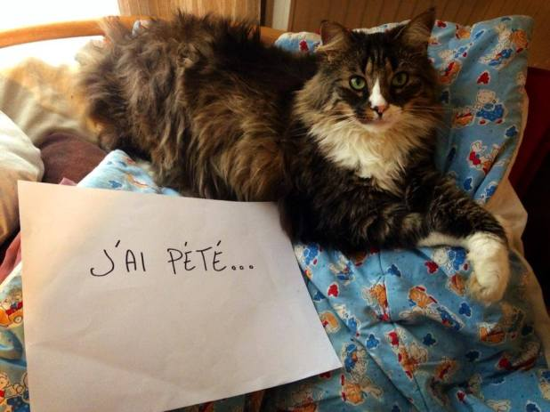 pancarte_honte_chat_pet