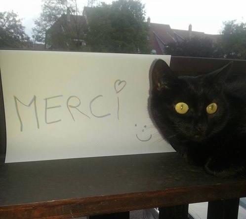 pancarte_honte_chats_merci_partenaire