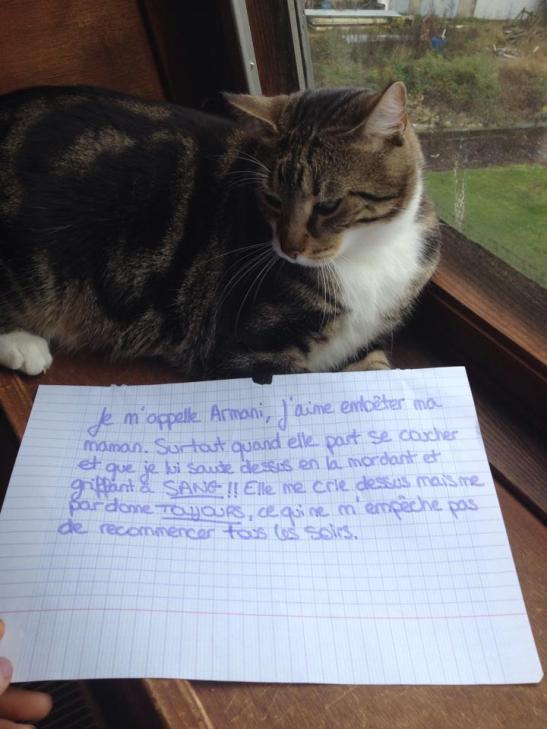 armani-pancarte-honte-chats