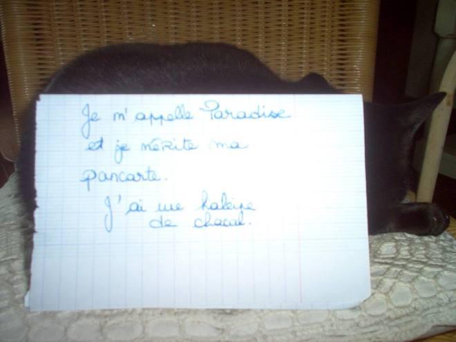 chat-pancarte-honte-drole-haleine