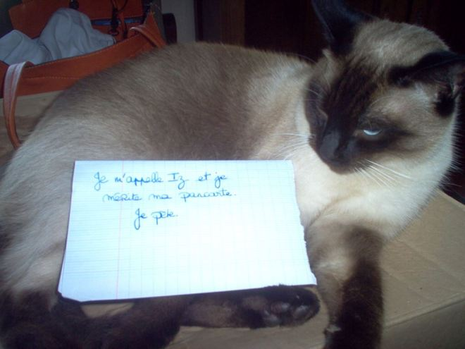 chat-pancarte-honte-drole-odeur