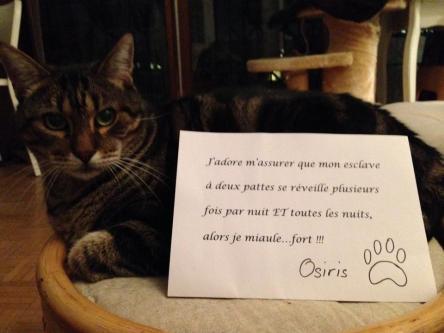 chat-pancarte-honte-miaule