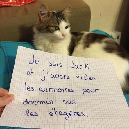 jack-chat-pancarte-honte-videur-armoire