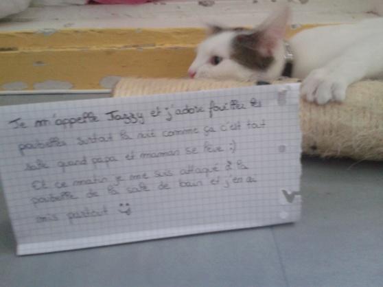 pancarte-de-la-honte-jazzy (7)